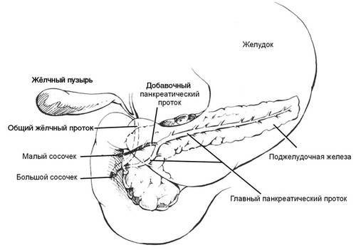 Структурата на панкреасот