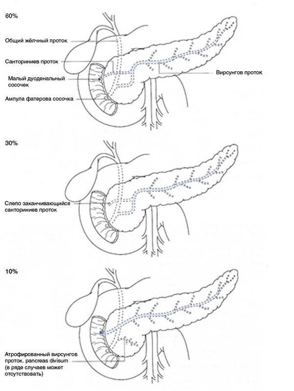 систем vnutripankreaticheskoy дуктална Анатомското конфигурација