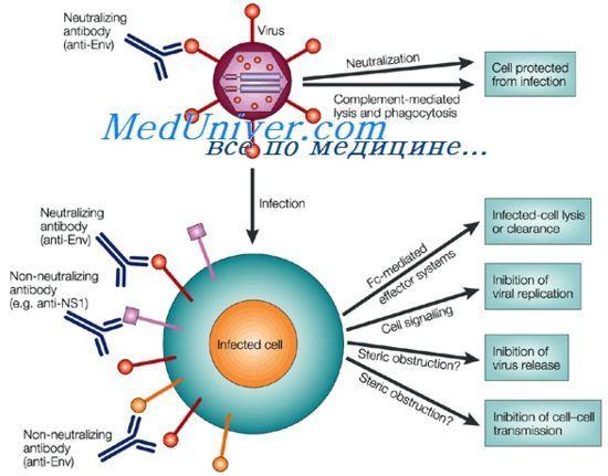 антигеноста имуноглобулин