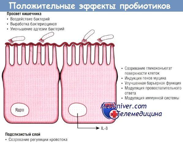 Эффективность пробиотиков в профилактике язвенного некротизирующего энтероколита (янэк) у недоношенных детей