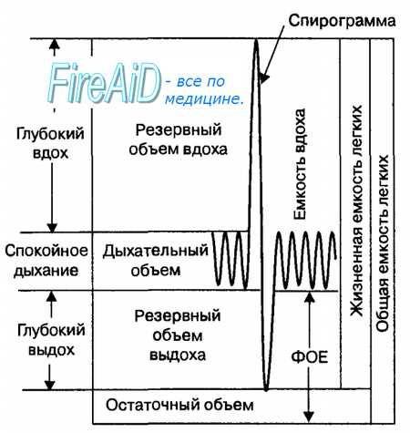 Дишење фаза. На обемот на белите дробови (пулмонална). респираторната стапка. Длабочината на дишењето. белодробните волумени на воздух. Приливен волумен. Резерва, резидуален волумен. капацитет на белите дробови.