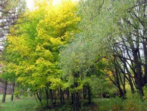 Арборетум во шумата