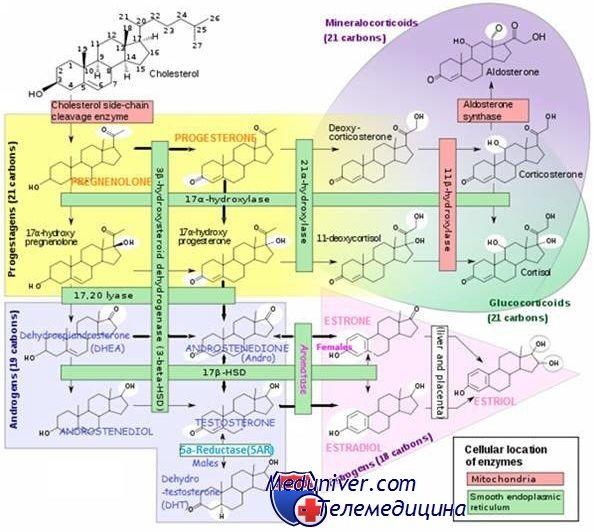Диагностика стероидных гормонов. Методы