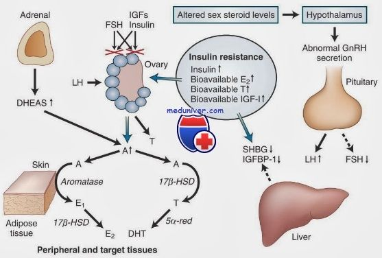Факторы роста яичников. Инсулиноподобные и эпидермальный факторы роста
