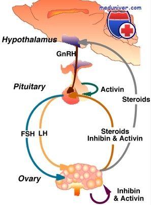 Функции активина. Влияние на синтез половых гормонов