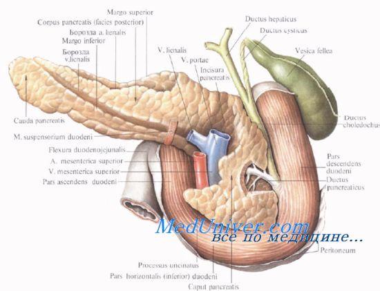 Функция поджелудочной железы у новорожденных детей