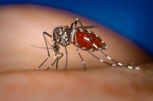 febra hemoragică Dengue: simptome, patogen