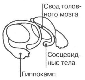 mozg48.jpg