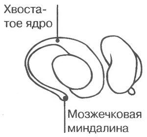 mozg49.jpg