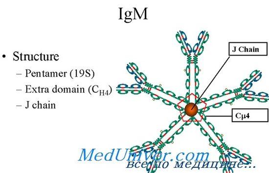 hiperprodukcija IgM