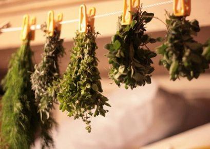 Химические свойства растений для лечения детей