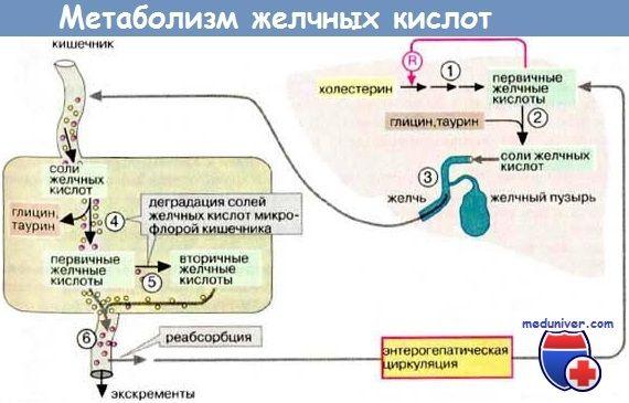 Прогрессирующий семейный внутрипеченочный холестаз (псвх) типы, диагностика