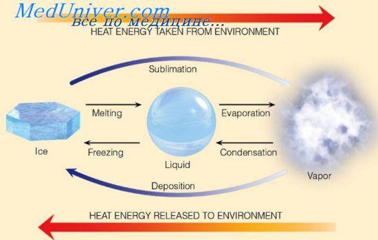 Испарение как фактор теплоотдачи. Одежда и испарение с поверхности тела