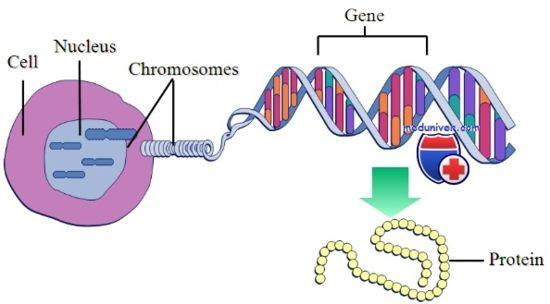 хромозомни аномалии