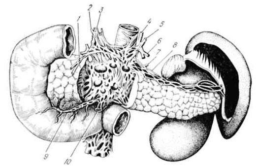 Инервација на панкреасот