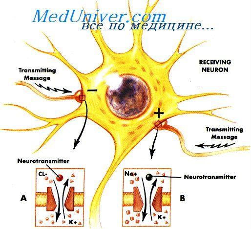 плацента при беременности