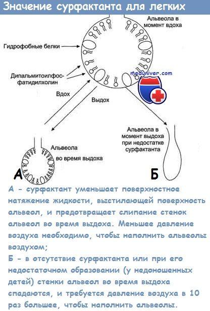 nervii cranieni ale fătului