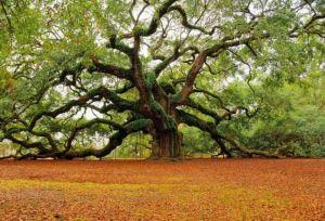 Јужна и Северна дрвја