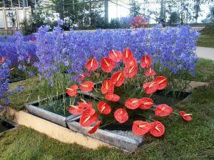 Каков вид на цвеќиња растат во земјата