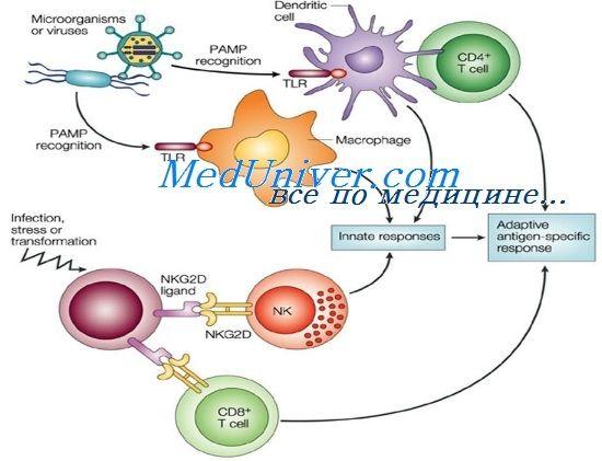 вроден имунитет