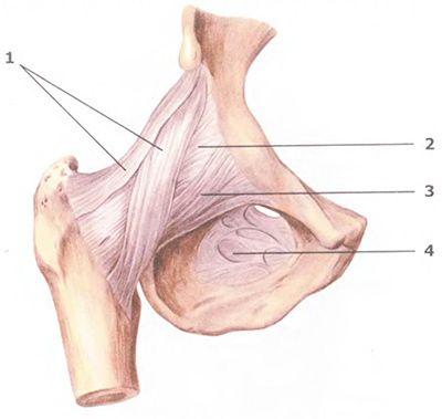 Комплекс упражнений для очищения суставов
