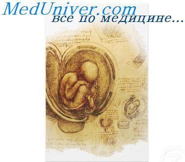 мозг эмбриона