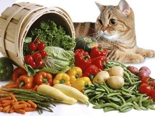 Што да се хранат на мачки и мачки со панкреатитис?