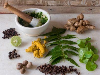 Лечебные свойства растений для лечения детей