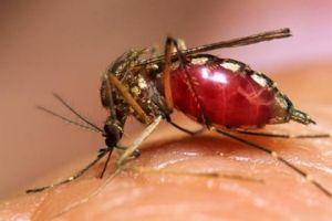 Febra, virusul West Nile la un copil, simptomele, tratamentul, prevenirea