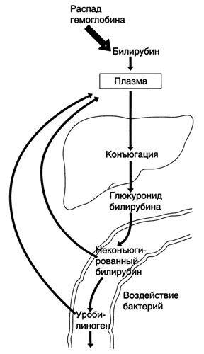 RIS-45-1.jpg