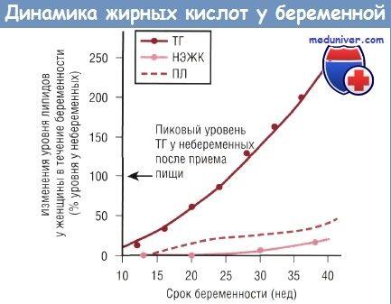 Механизмы переноса жирных кислот через плаценту