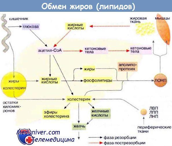 Výměna tuku (lipidů)