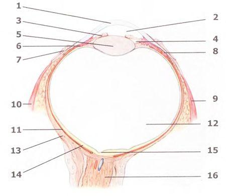 Методики очищения органов зрения и слуха