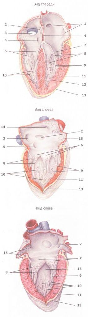 Методики очищения сосудов и сердечной мышцы