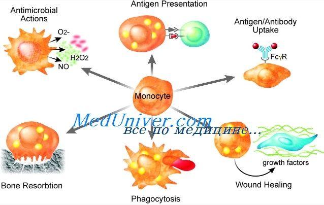 Нарушения функции моноцитов и макрофагов иммунитета