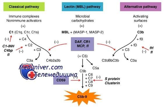 Недостаточность белков регуляторов системы комплемента