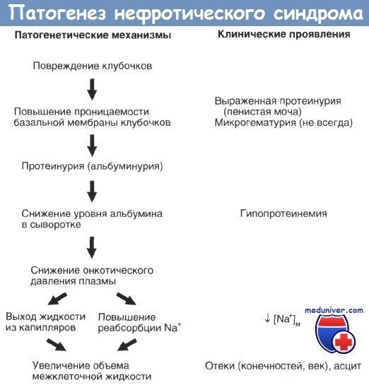 Patogeneza nefrotski sindrom