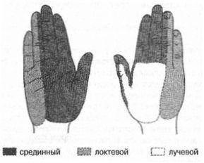 Zonele de inervație a nervilor de la umăr și antebraț de suprafață