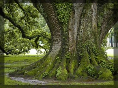 За богатите и посно семејствата на дрвенести растенија