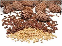 Můžete jíst ořechy pro žaludku?