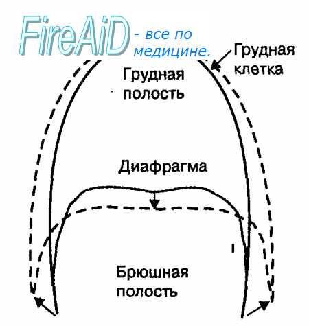 Надворешни дишење. респираторна биомеханика. Процесот на дишење. Биомеханика вдишување. Како што луѓето дишат?