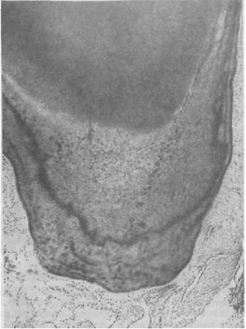 ortopedicheskaya_stomatologia_86.JPG