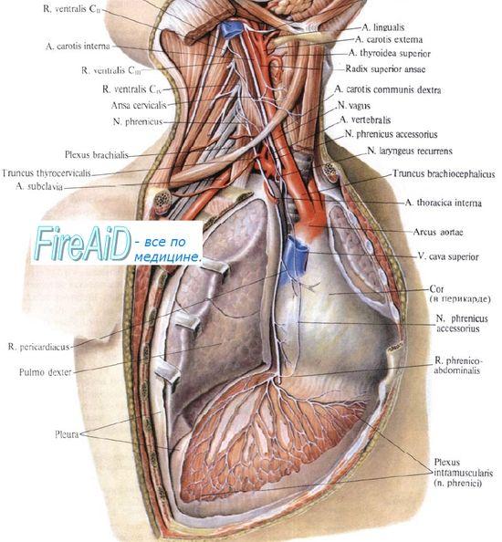Ефекти врз дишењето вежби со висок интензитет. трошоците за енергија на дишењето.