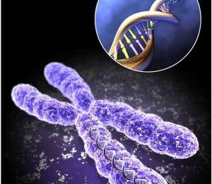 Преимплантационная генодиагностика