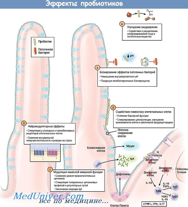 Vliv probiotik na střevní