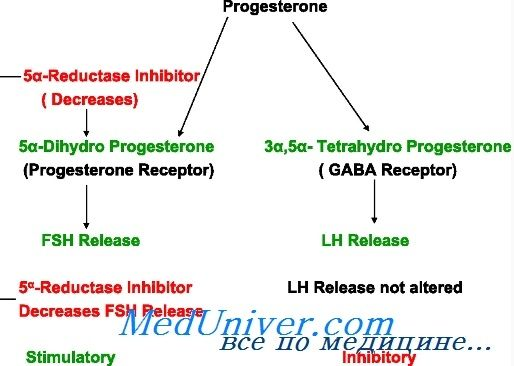 Прогестерон синтез, метаболизм. Прогестероновые рецепторы