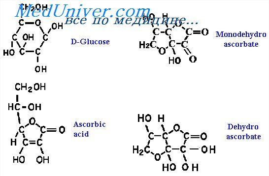 Пантотеновая кислота. Физиология обмена аскорбиновой кислоты