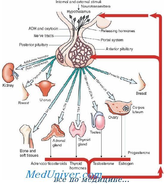 Рецепторы к гонадотропному рилизинг гормону. Агонисты и антагонисты