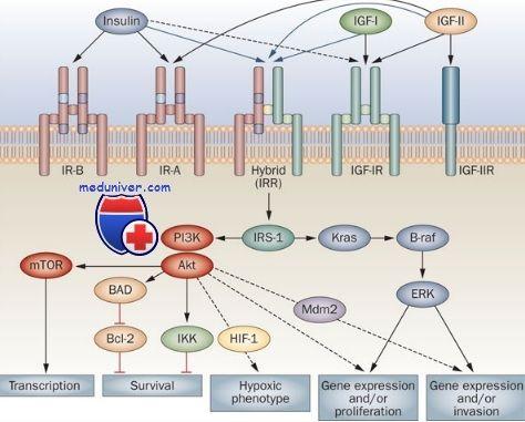 Рецепторы с тирозинкиназной активностью. Рецепторы к инсулину и факторам роста