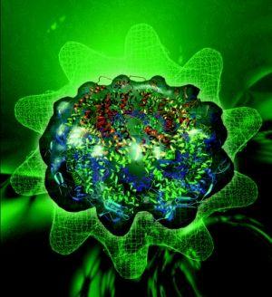 virusul sincițial (RSV), infecții respiratorii la copii
